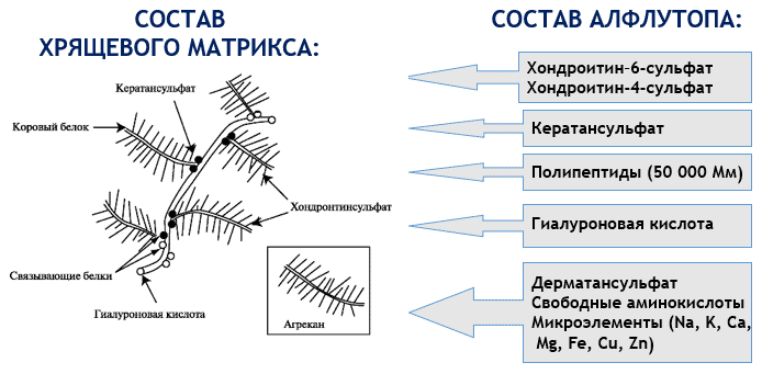 алфлутоп инструкция по применению